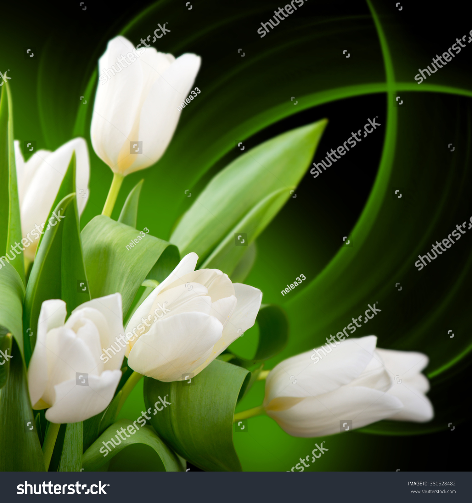 Beautiful Spring Tulip Flowers Growing Beautiful Stock Photo