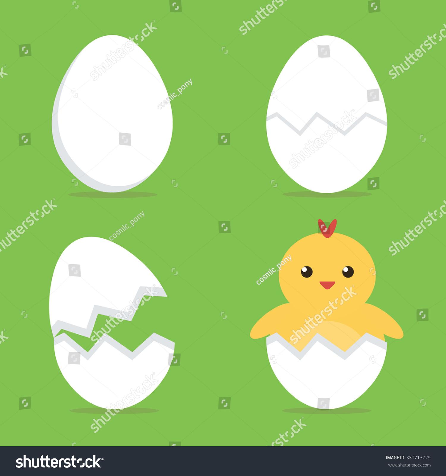Baby Chicks Hatching Process