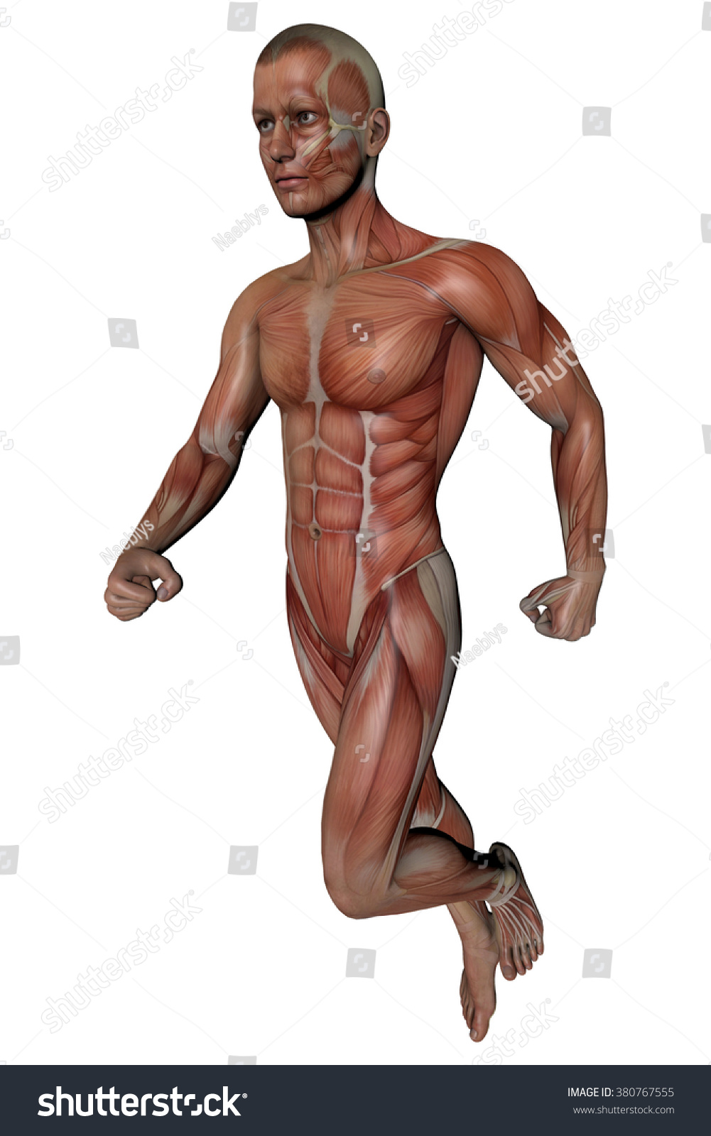 Fitness Man Body Anatomy Muscles Skeleton Stock Illustration ...
