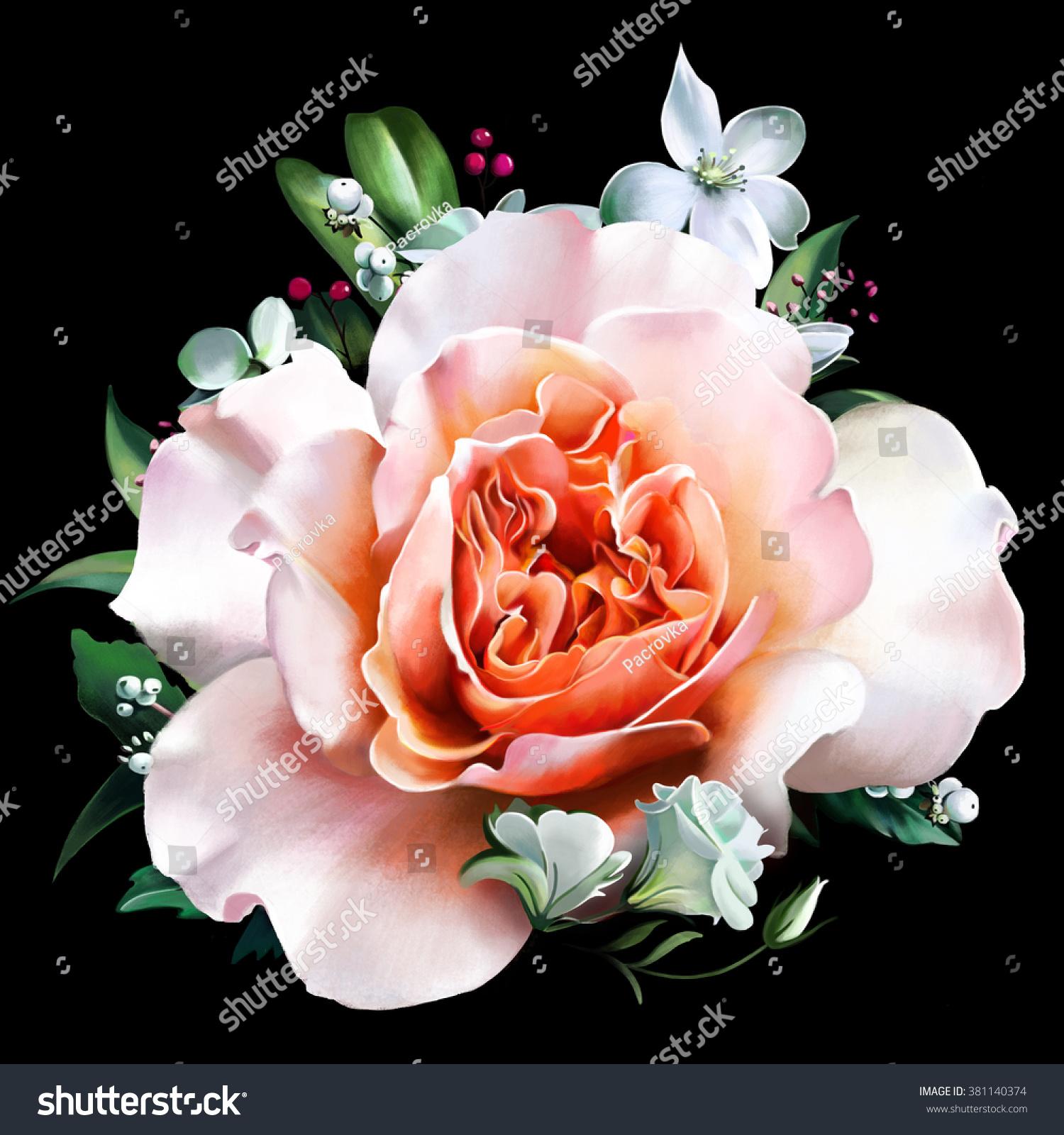 beautiful pink rose on black background stock illustration