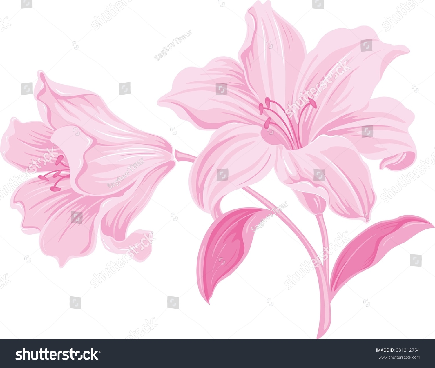 Lily flowers blooming lily card floral stock vector royalty free lily flowers blooming lily card or floral background with blooming lilies flowers silhouette izmirmasajfo