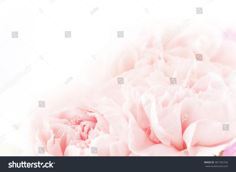 floral background of pink carnation flowers #381702742