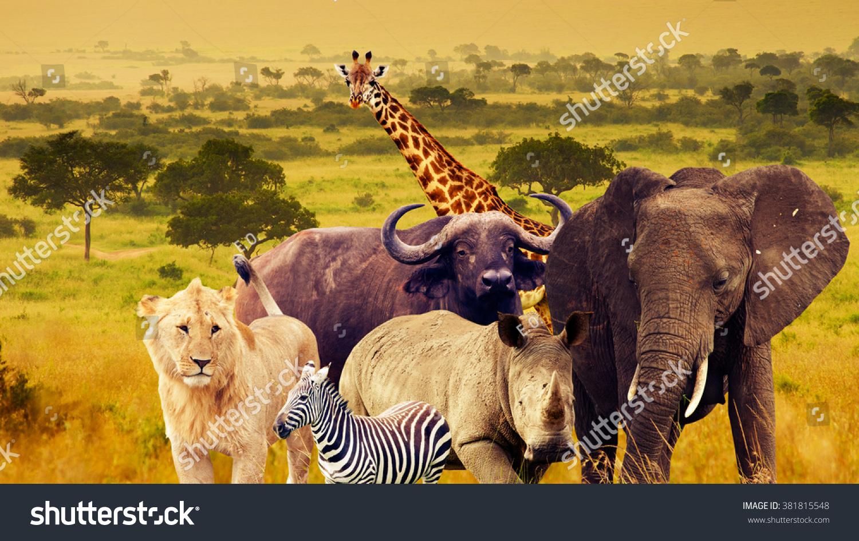 Wild Animals Of Africa Collage