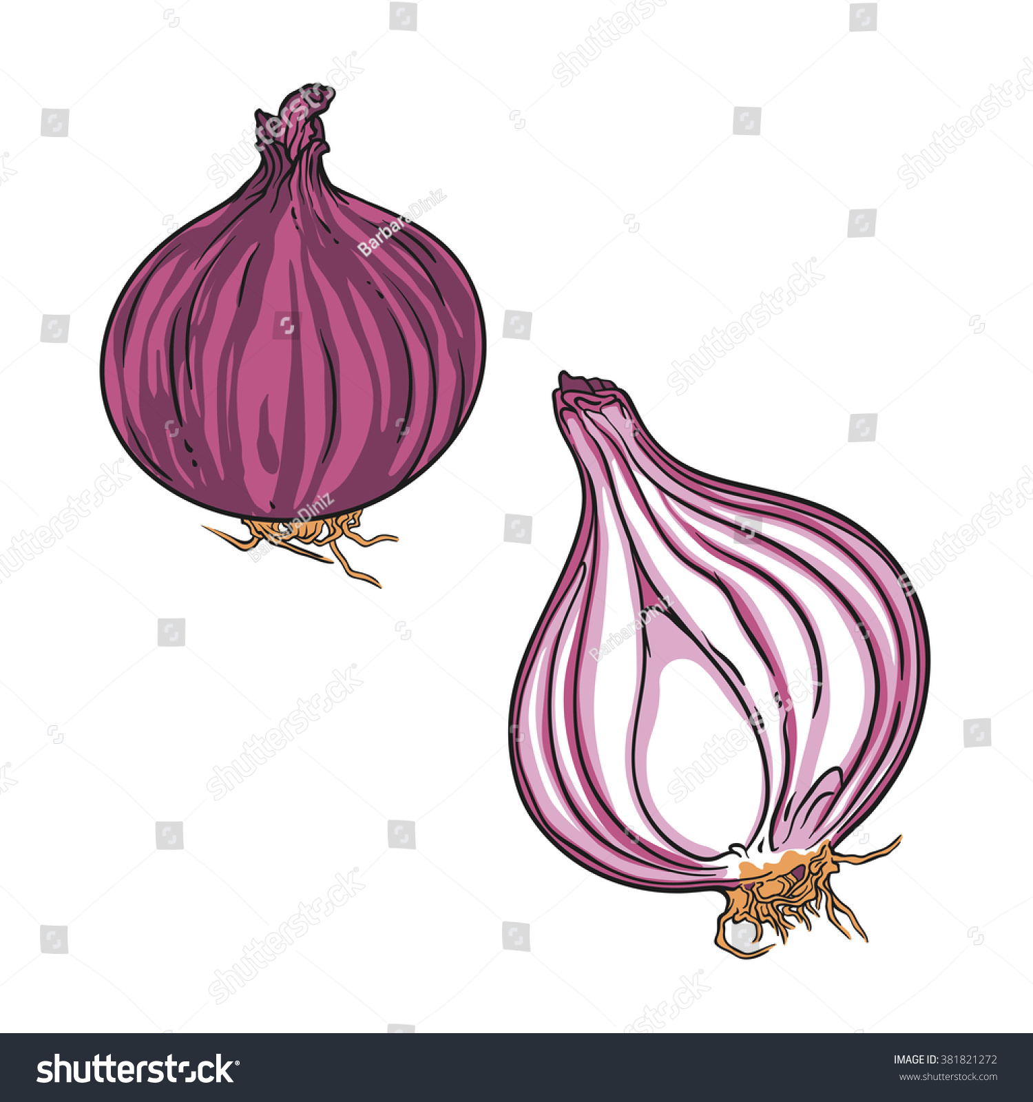 Whole Red Onion Bulb Sliced Onion Stock Vector 381821272 ...