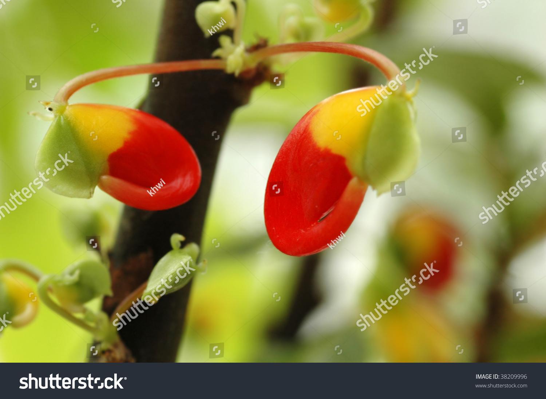Bright vibrant colors impatiens niamniamensis congo stock for Bright vibrant colors