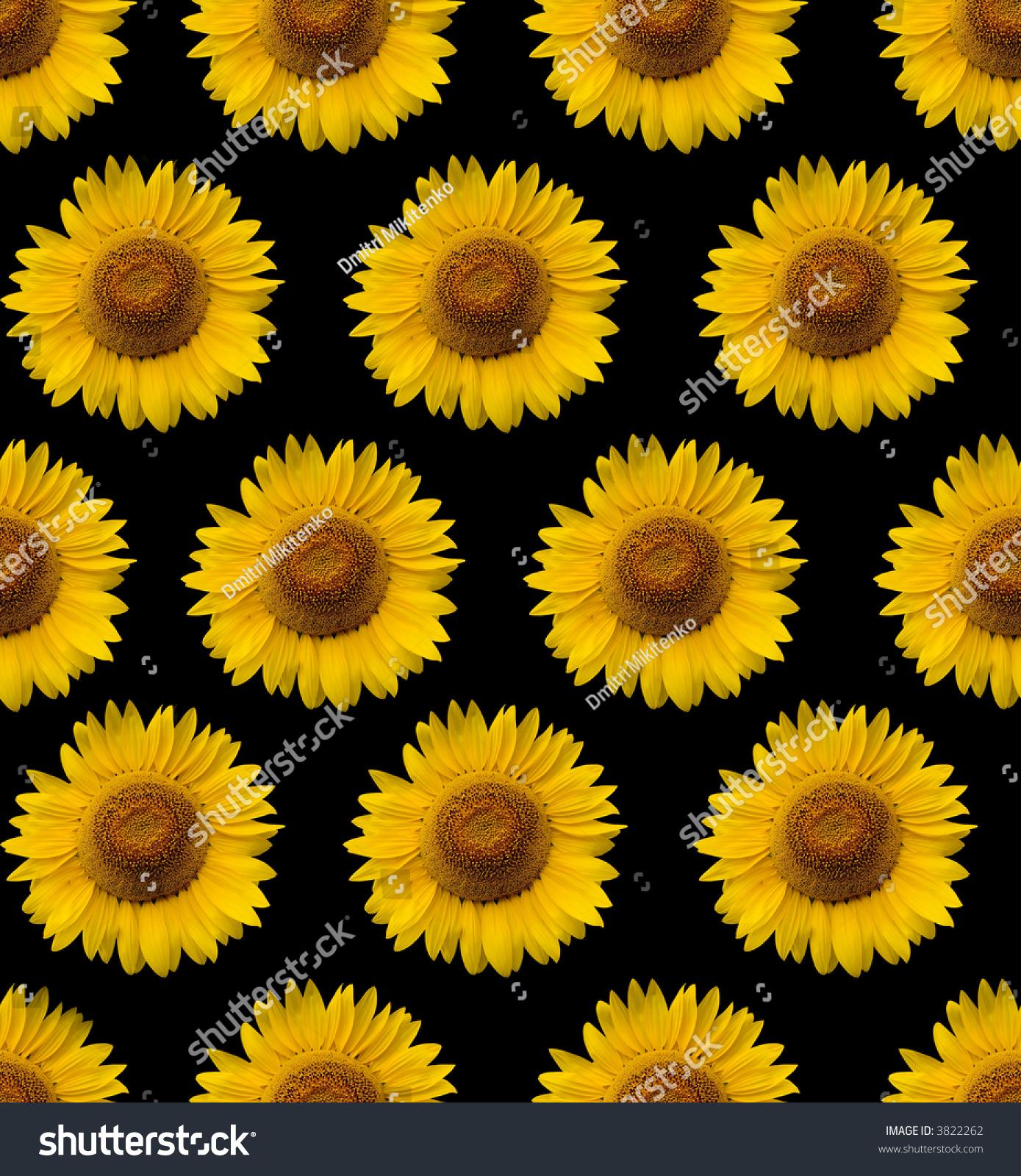 Sunflower Wallpaper Stock Photo 3822262 Shutterstock