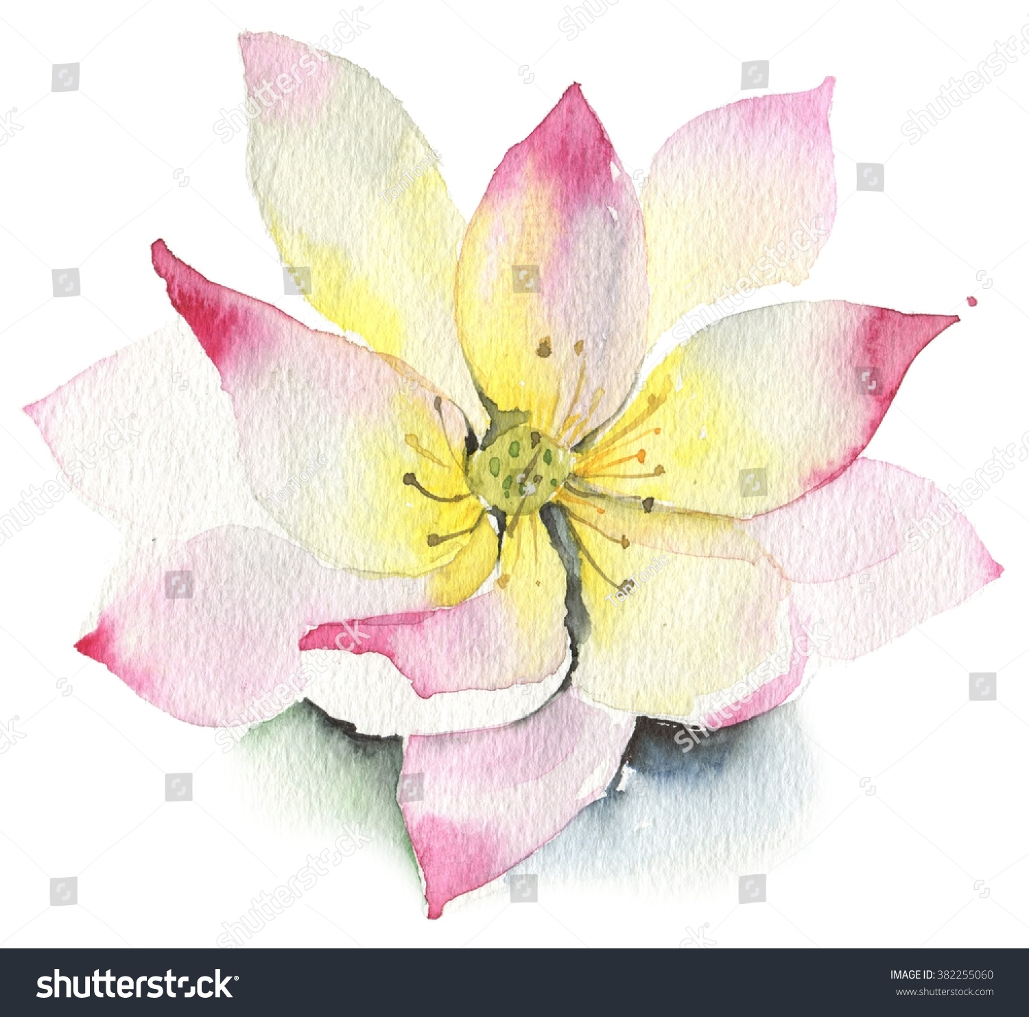 Yoga pattern background seamless pattern with five petals lotus flower - Lilies And Lotuses On A White Background Isolated In White Lotus Watercolor Pink