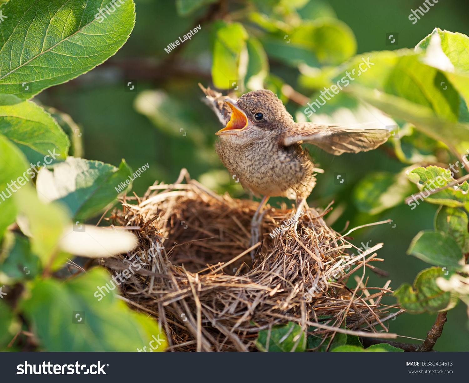 Baby Bird Flying From Nest | www.pixshark.com - Images ...