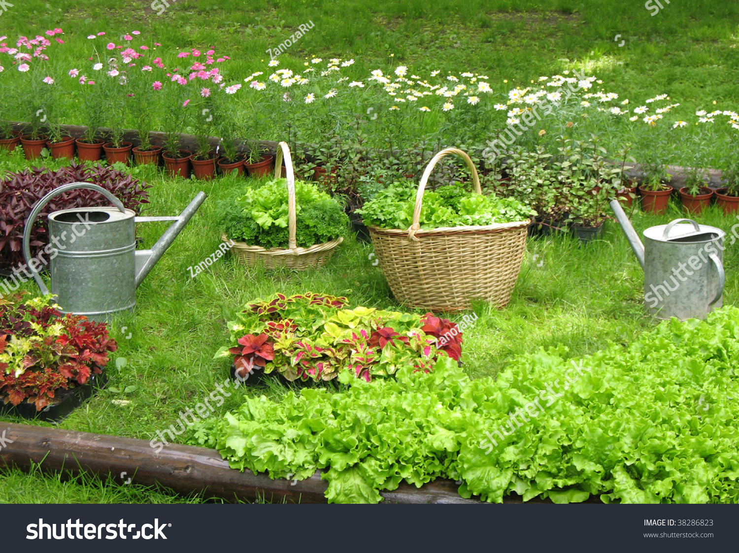 Aromatic herbs in baskets and containers stock photo 38286823 shutterstock - Aromatic herbs pots multiple benefits ...