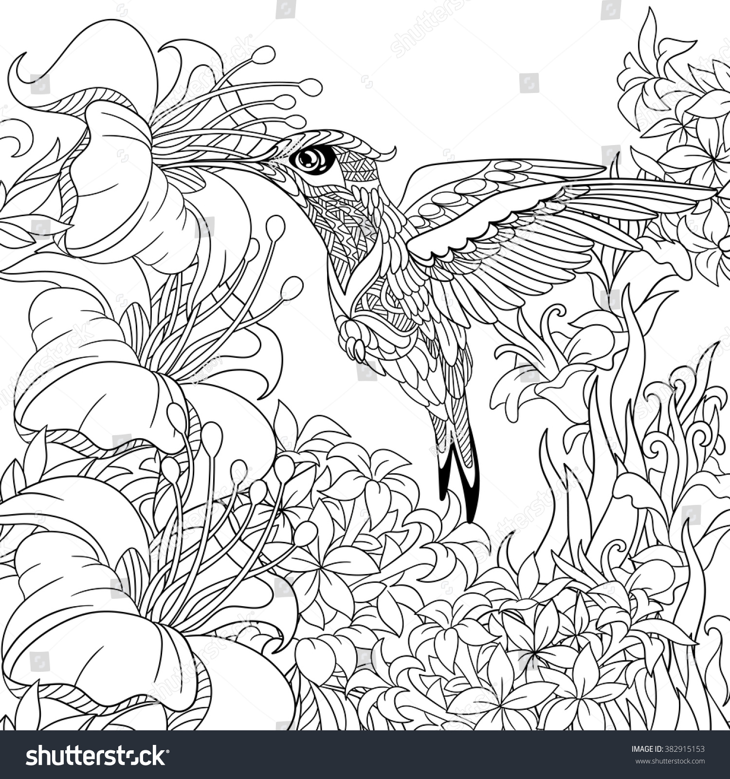 Zentangle stylized cartoon hummingbird flying around flowers full of nectar sketch for adult antistress coloring page hand drawn doodle zentangle