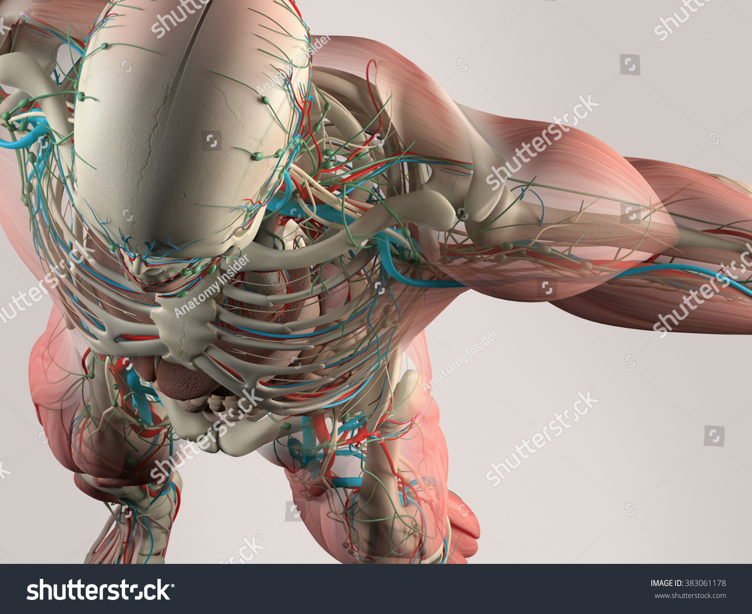 Human Anatomy Detail Skull Shoulder Bone Stock Illustration