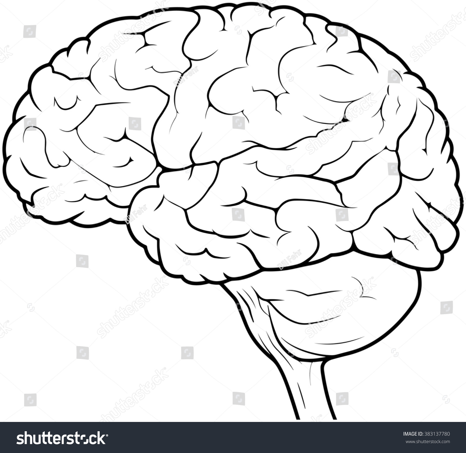 Side View Line Drawing Of A Human Brain Stock Photo ...