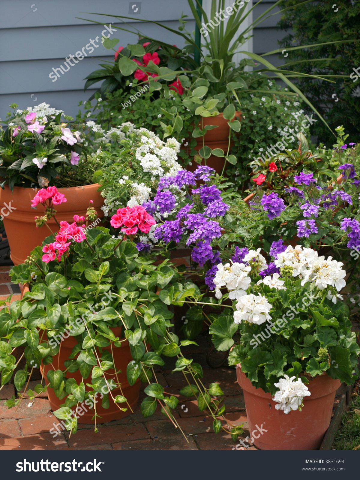 Beautiful Display Potted Flowers Plants Stock Photo Edit Now