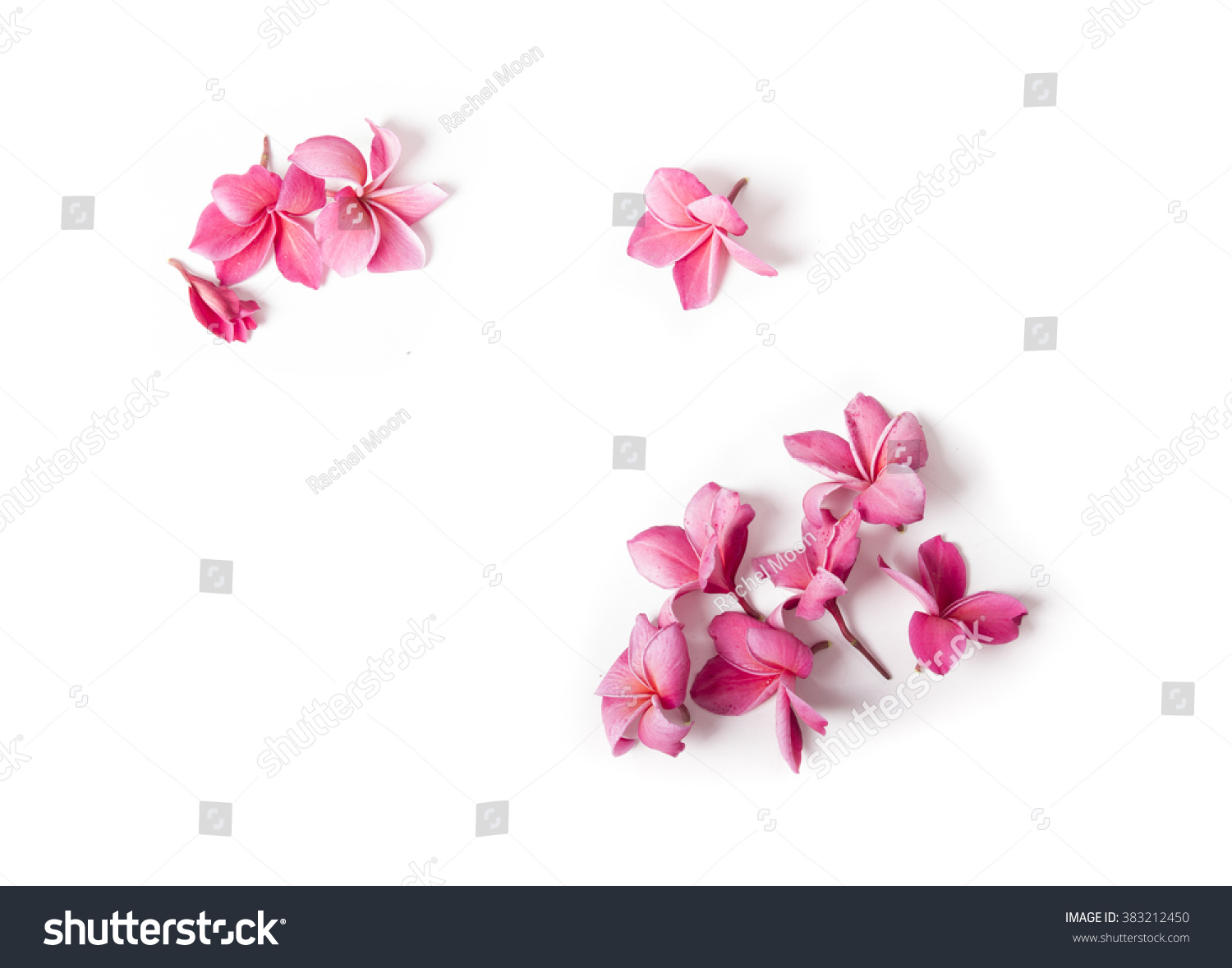 Group of Pink Frangipani isolated on White #383212450