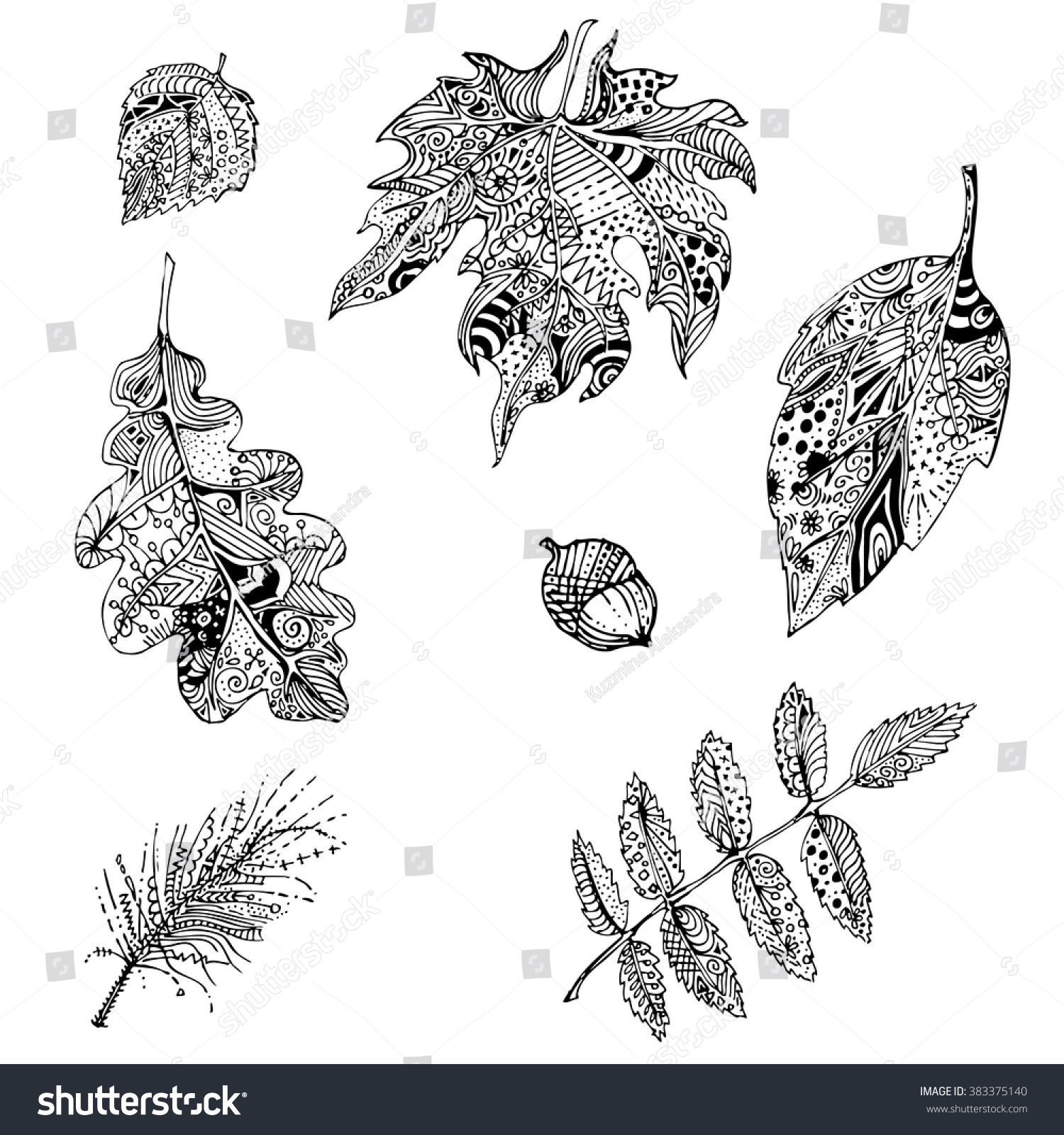 Hand Drawn Black White Doodle Leaves Of Mountain Ash Oak Apple Tree Pine Branch Ethnic Patterned Vector Illustration Sketch For Adult Antistress
