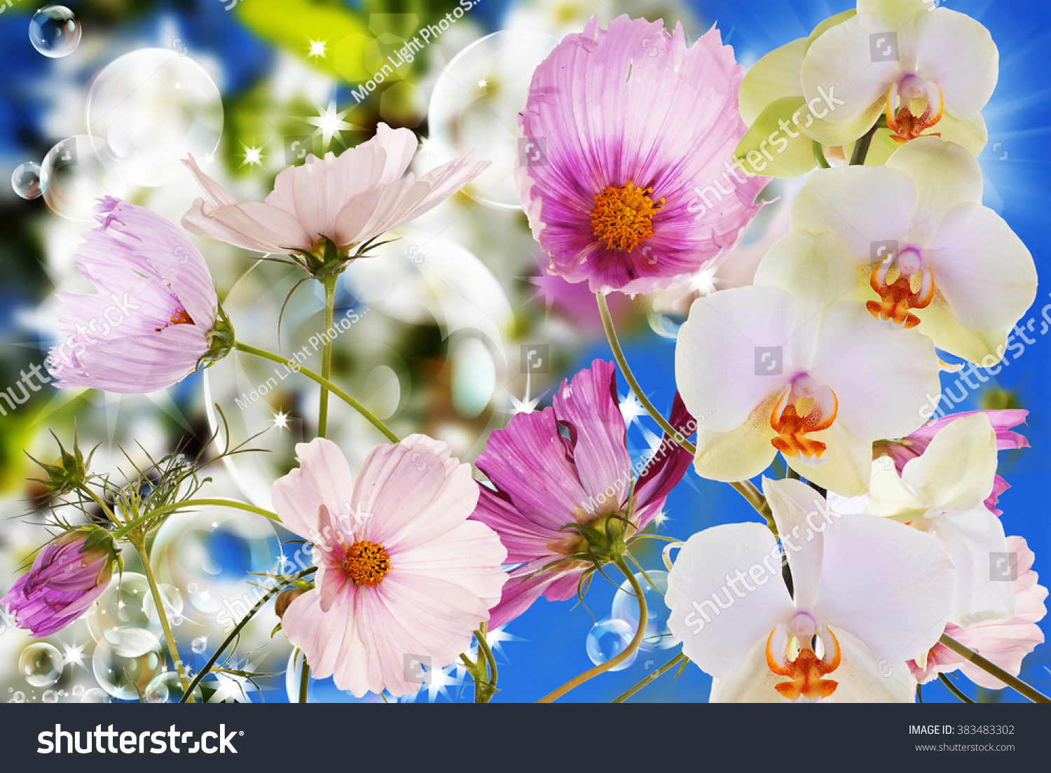 Beautiful exotic flower orchid stock photo royalty free 383483302 beautiful exotic flower orchid izmirmasajfo