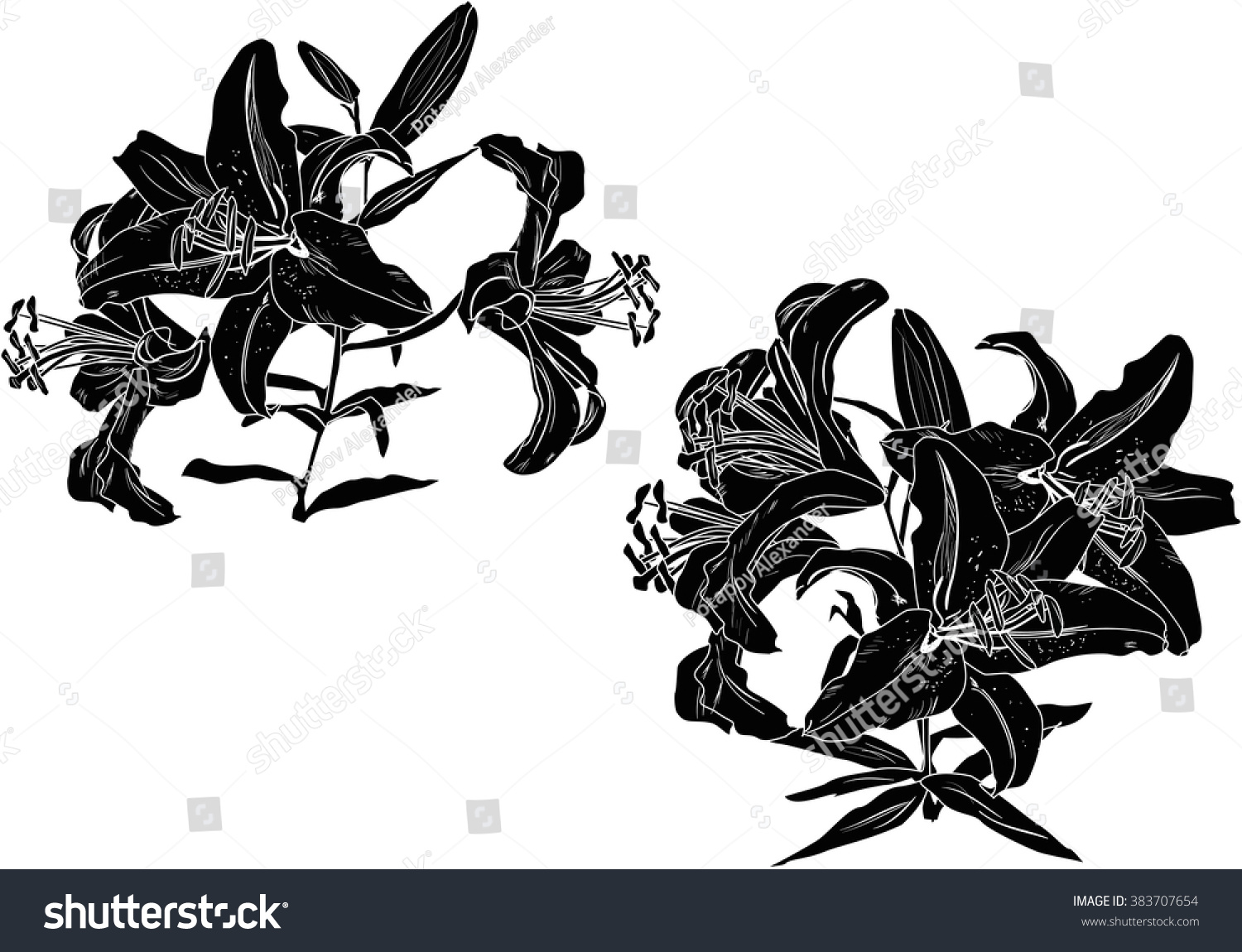 Illustration Black Lily Flowers Silhouettes Isolated Stock Vector