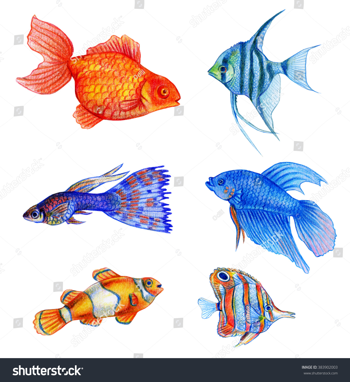 Watercolor Tropical Fish Set Hand Draw Stock Illustration Royalty
