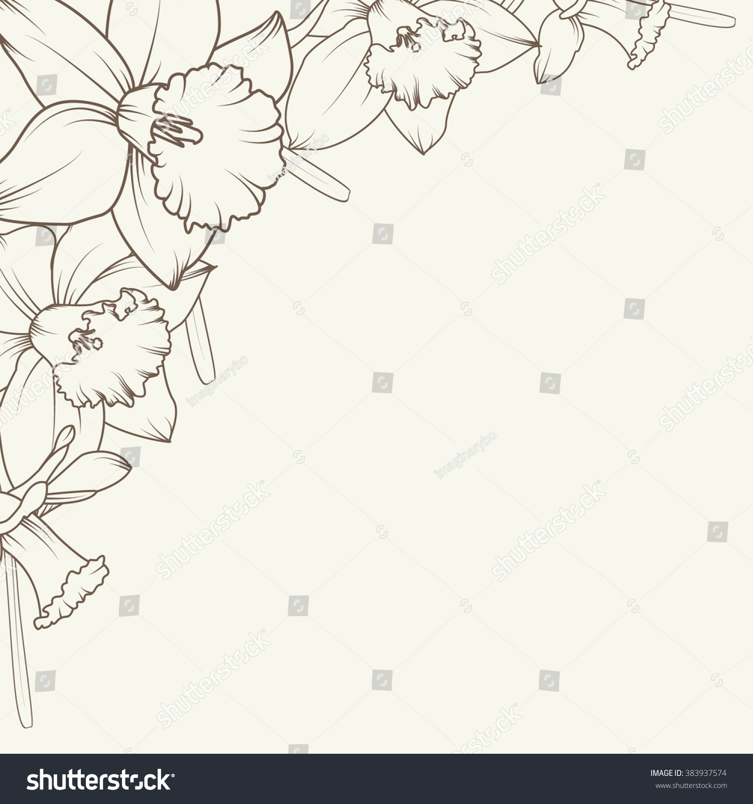 daffodil narcissus flowers corner frame design stock vector