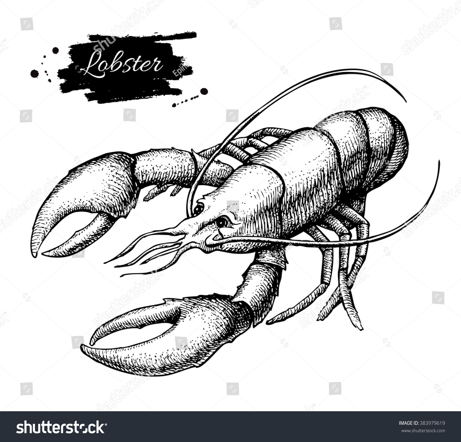 Uncategorized Lobster Drawings vector vintage lobster drawing hand drawn stock 383979619 monochrome seafood illustration great for menu poster
