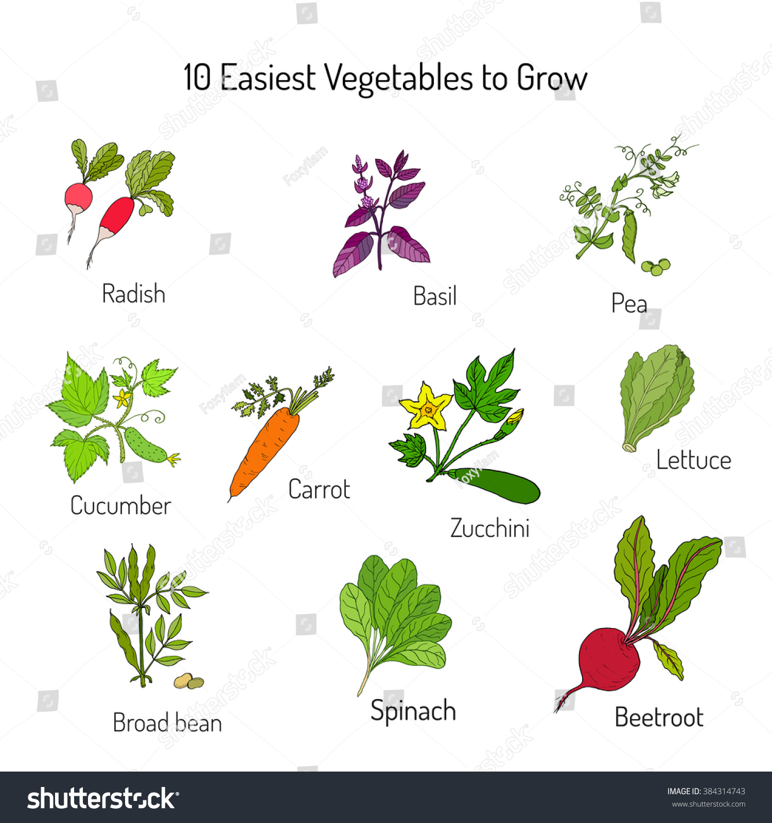 Easiest Vegetables To Grow. Garden Crops Set. Vector Illustration