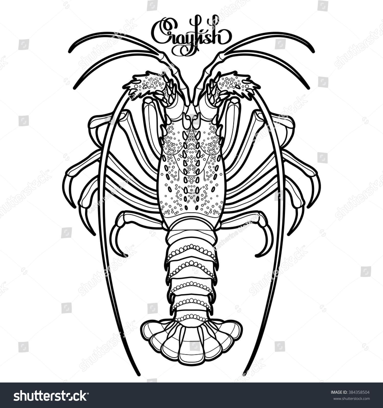graphic vector crayfish drawn line art stock vector 384358504