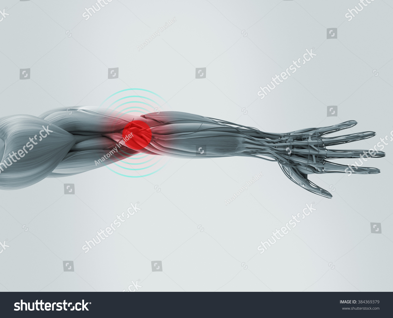 Anatomy model showing elbow pain. On plain studio background. | EZ ...