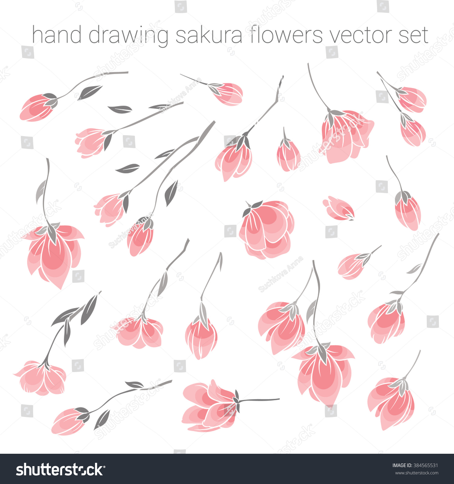 Large Set Delicate Pink Sakura Cherry Stock Vector 384565531 ...