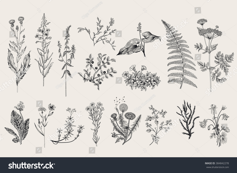 Herbs Wild Flowers Botany Set Vintage Stock Vector Royalty Free