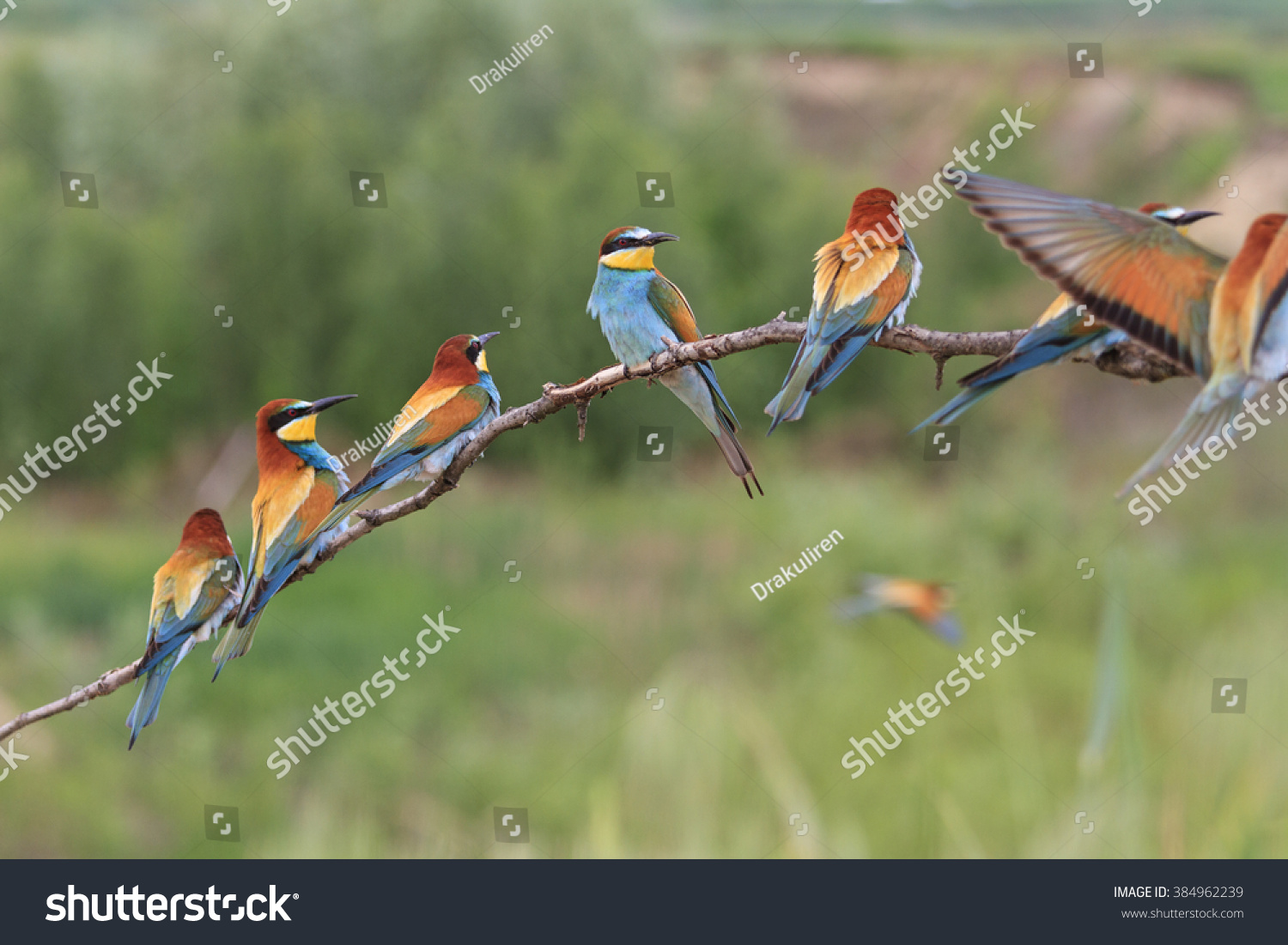 colored flock birds sitting on branch stock photo 384962239
