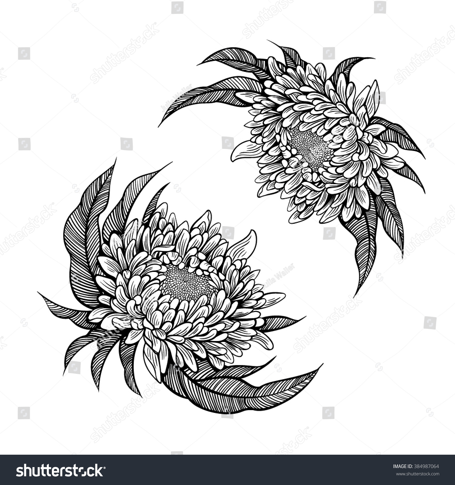 Vector Black White Peony Flower Illustration Stock Vector Royalty