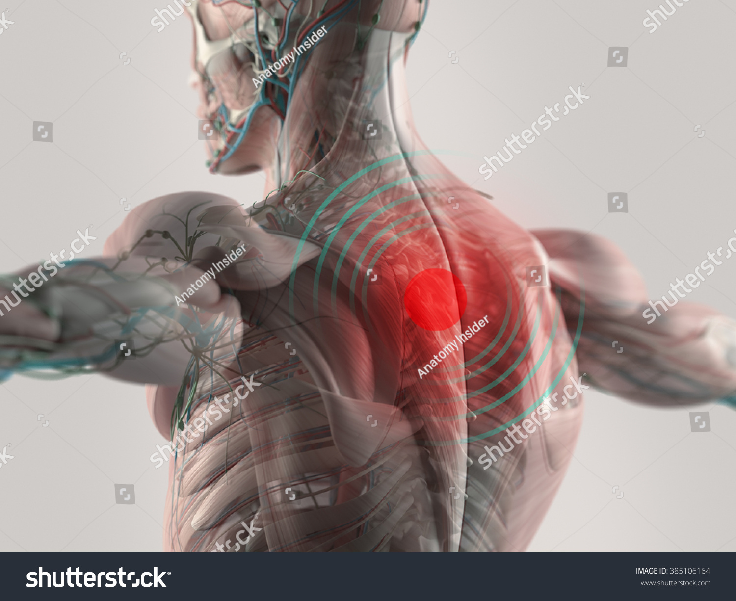 Human Anatomy Back Pain Highlighted Red Stock Illustration 385106164 ...