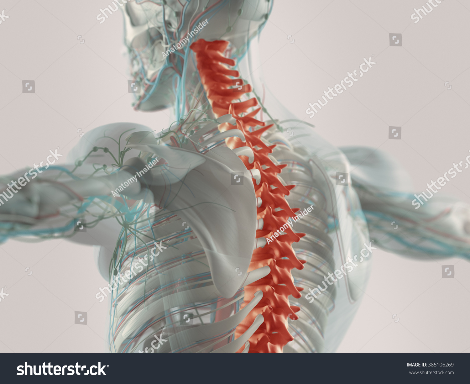 Human Anatomy Spine Pain Highlighted Red Stock Illustration
