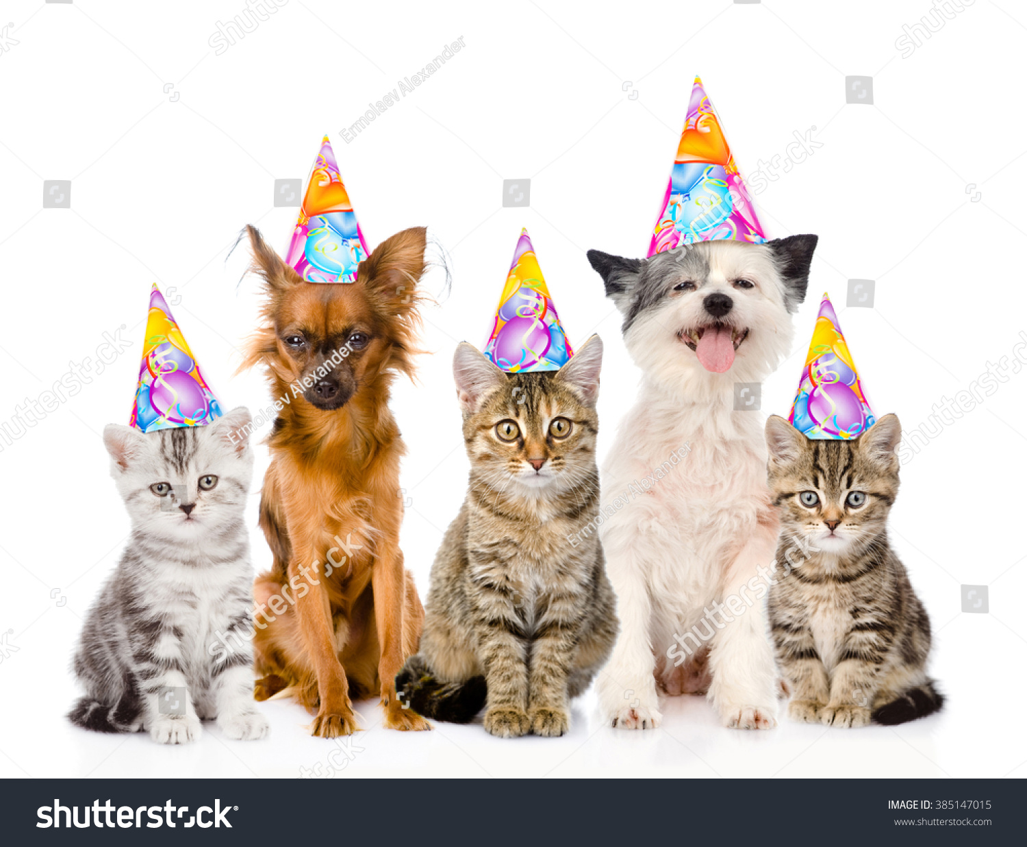 Large Group Cats Dogs Birthday Hats Stock Photo 385147015