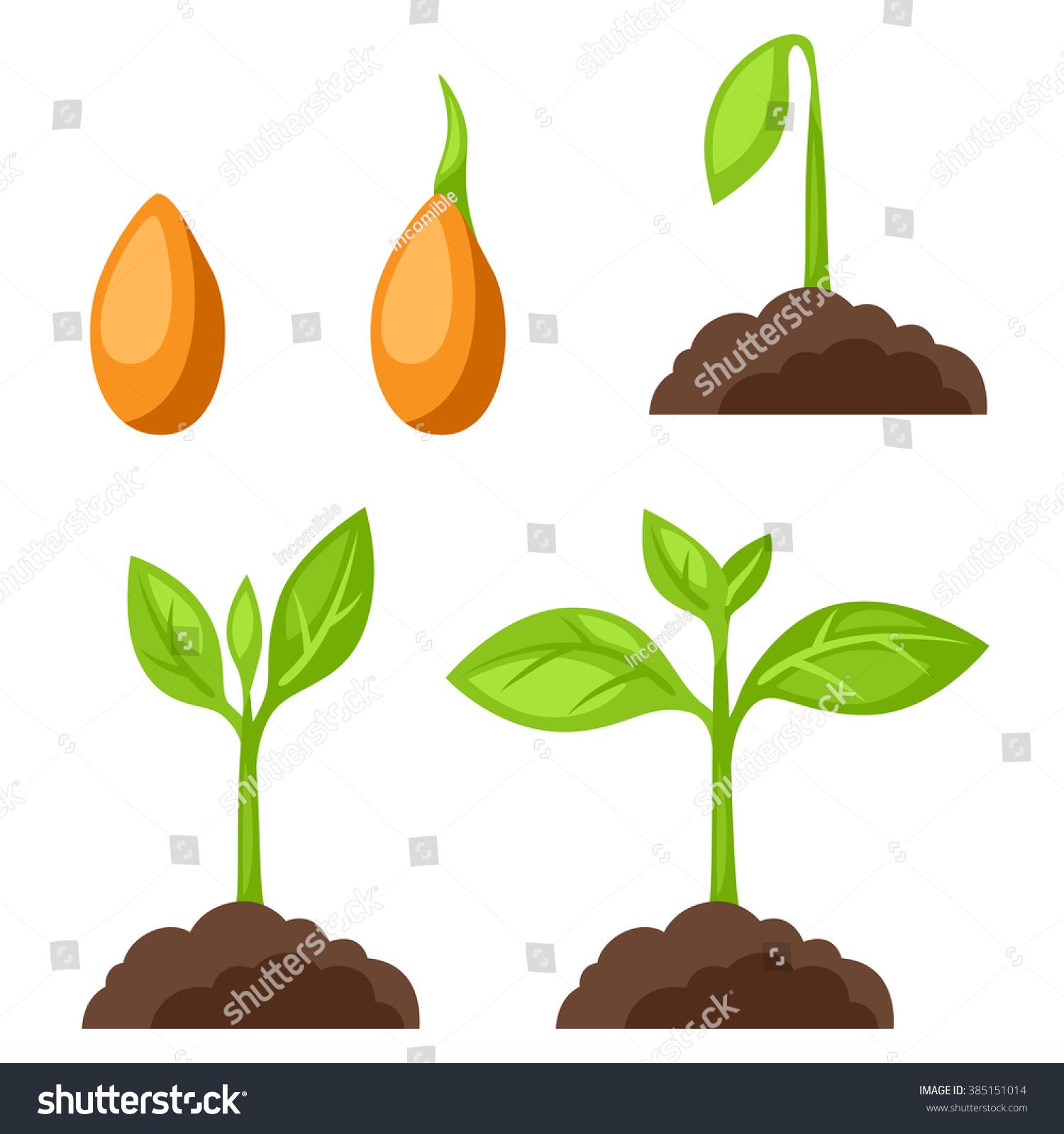 plant clipart