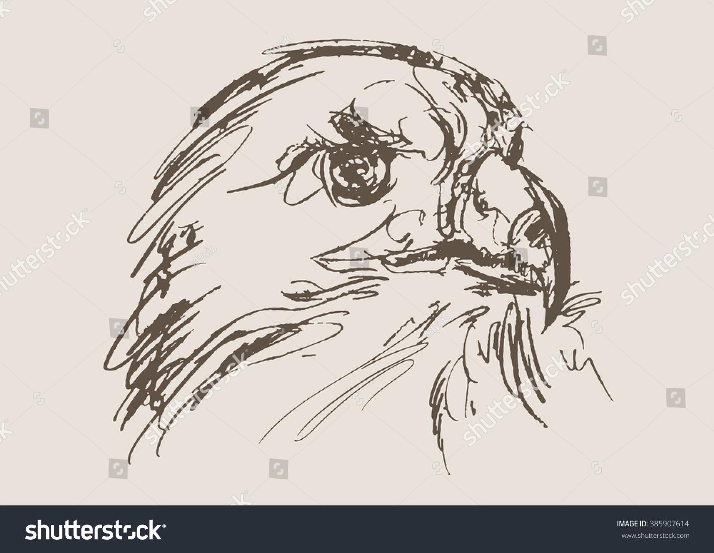 Eagle vector hand draw sketch