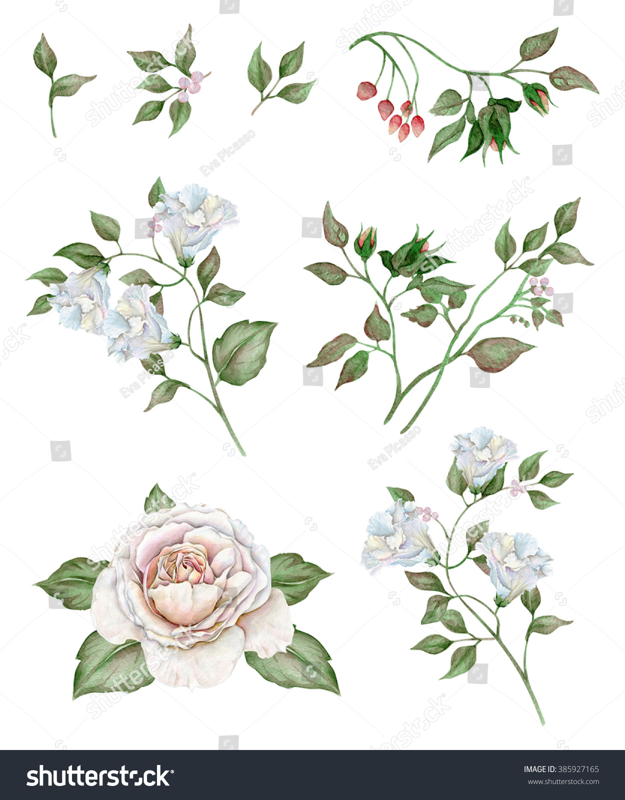 Watercolor Floral Set Delicate White Flowers Stock Illustration