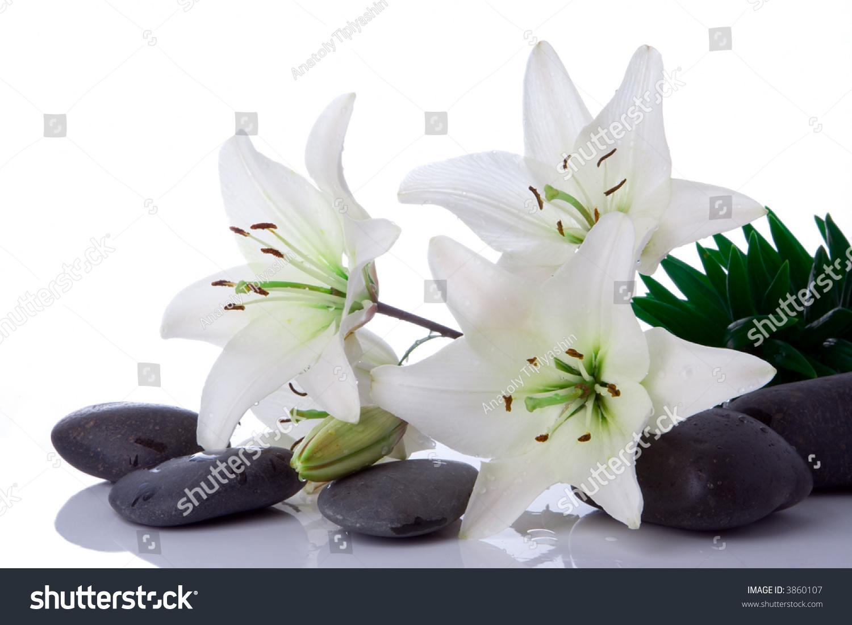 Madonna lily flower stones on white stock photo 3860107 shutterstock madonna lily flower with stones on white izmirmasajfo