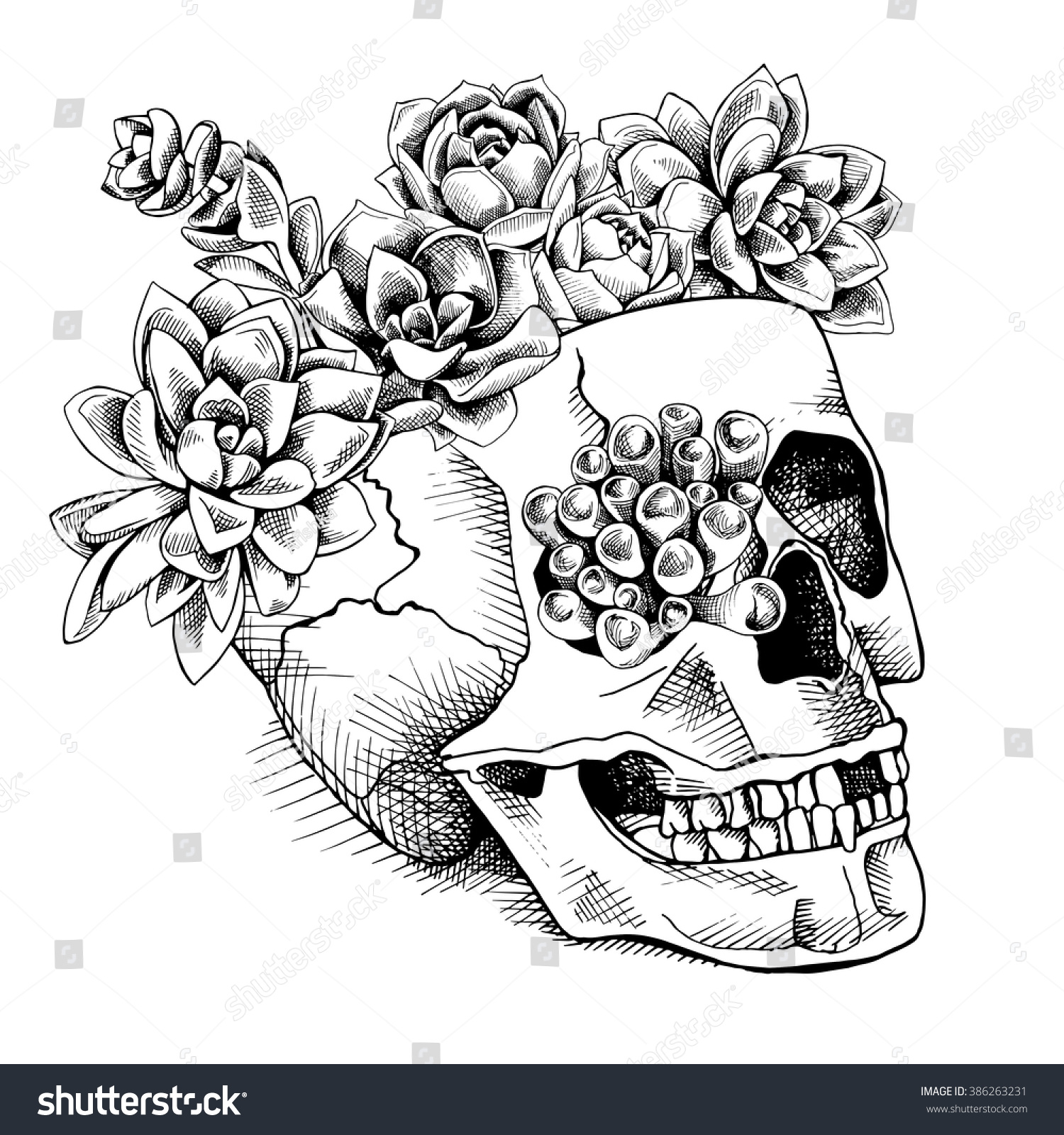 Skull Succulent Plants Vector Illustration Stock Vector Royalty Free 386263231