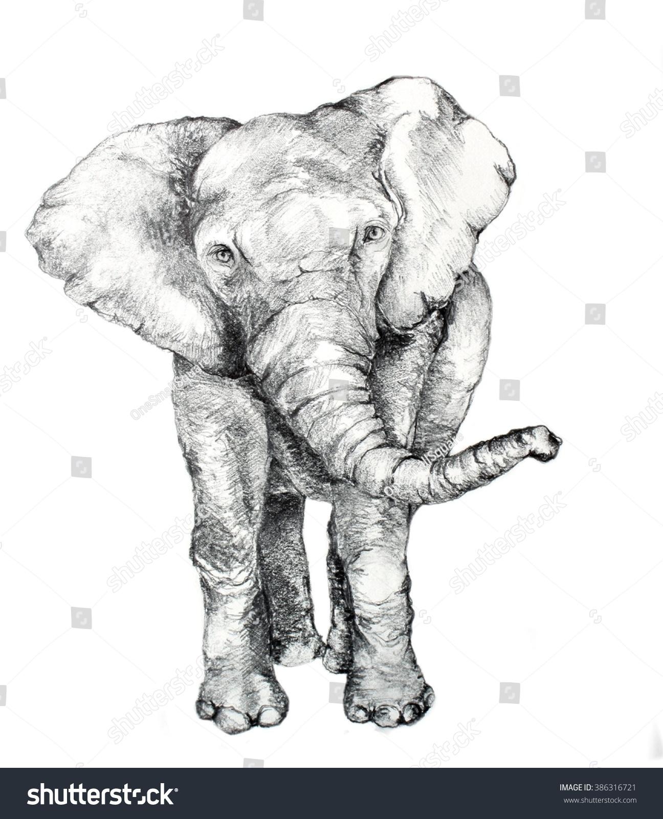Original hand drawn elephant sketch in pencil