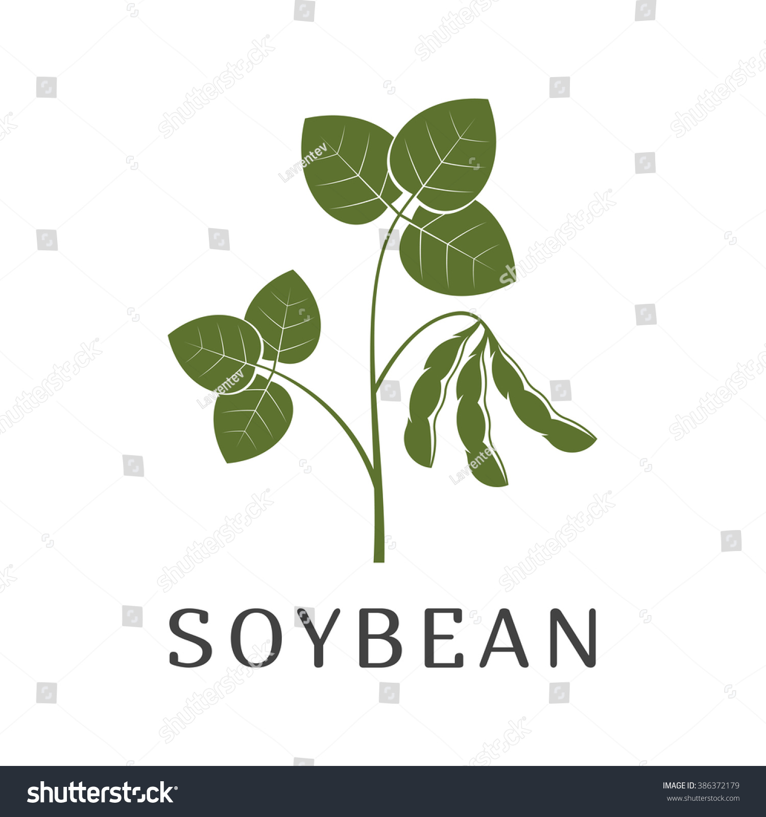 Vector Illustration Soybean Plant Isolated On Stock Vector ...