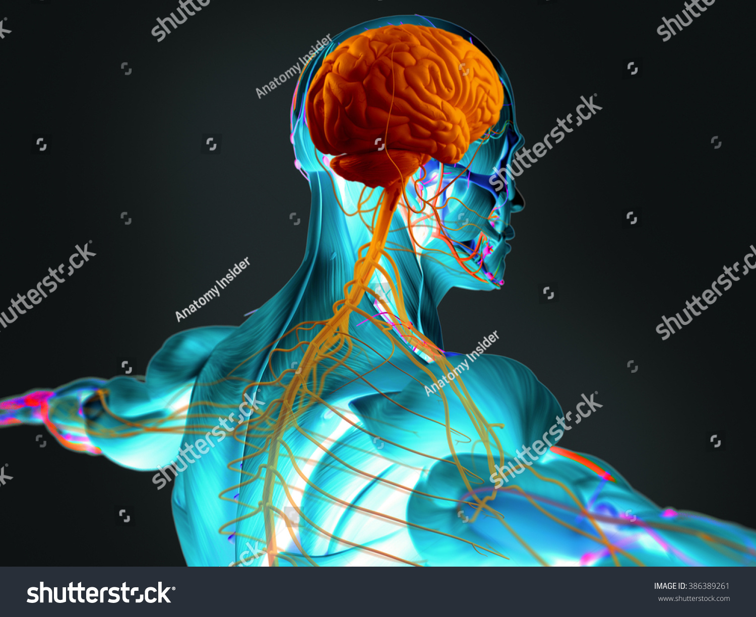 Human Anatomy 3 D Futuristic Scan Technology Stock Illustration ...