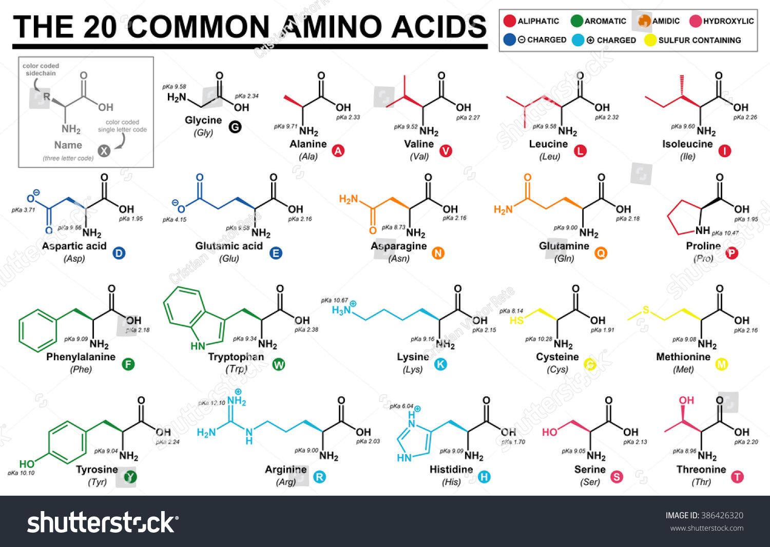 amino acids chart: Educational chart all common amino acids stock illustration