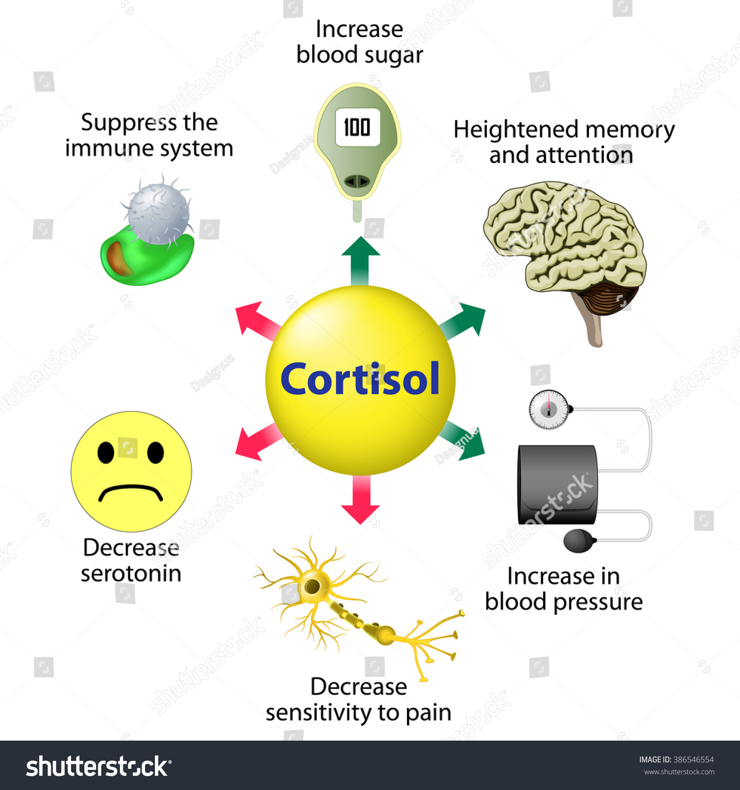 Cortisol Functions Released Response Stress Low 386546554