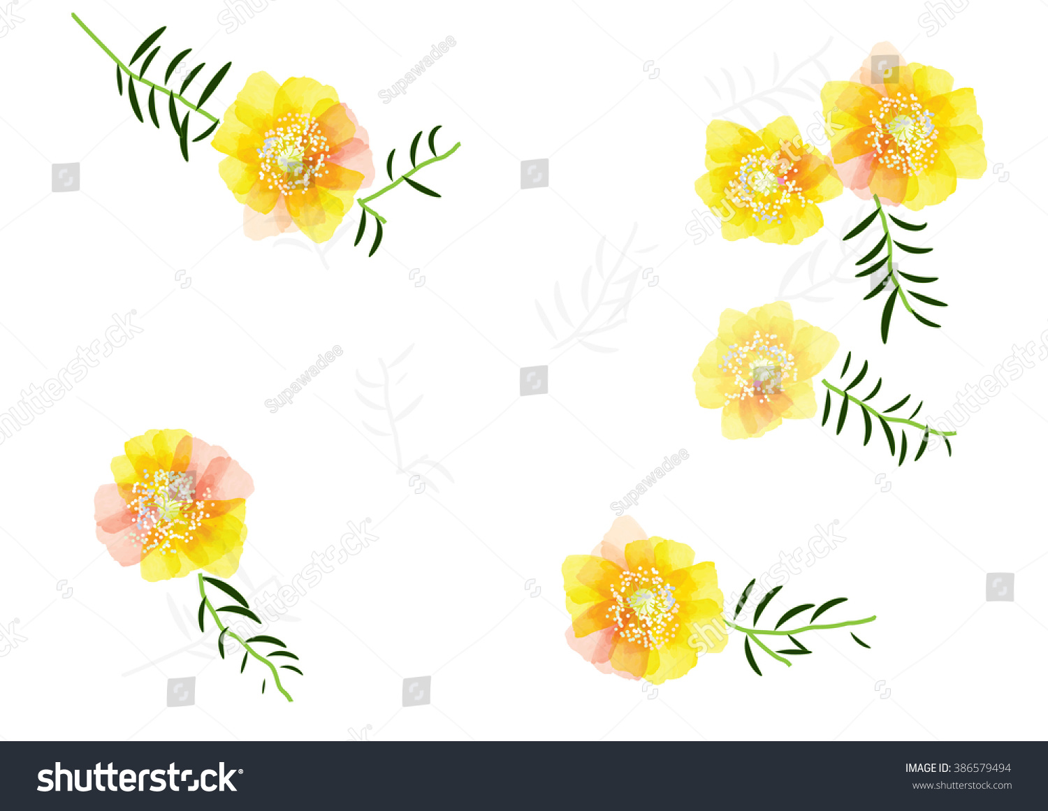 Portulaca Flower Cute Yellow Flowers Leaves Stock Vector Royalty
