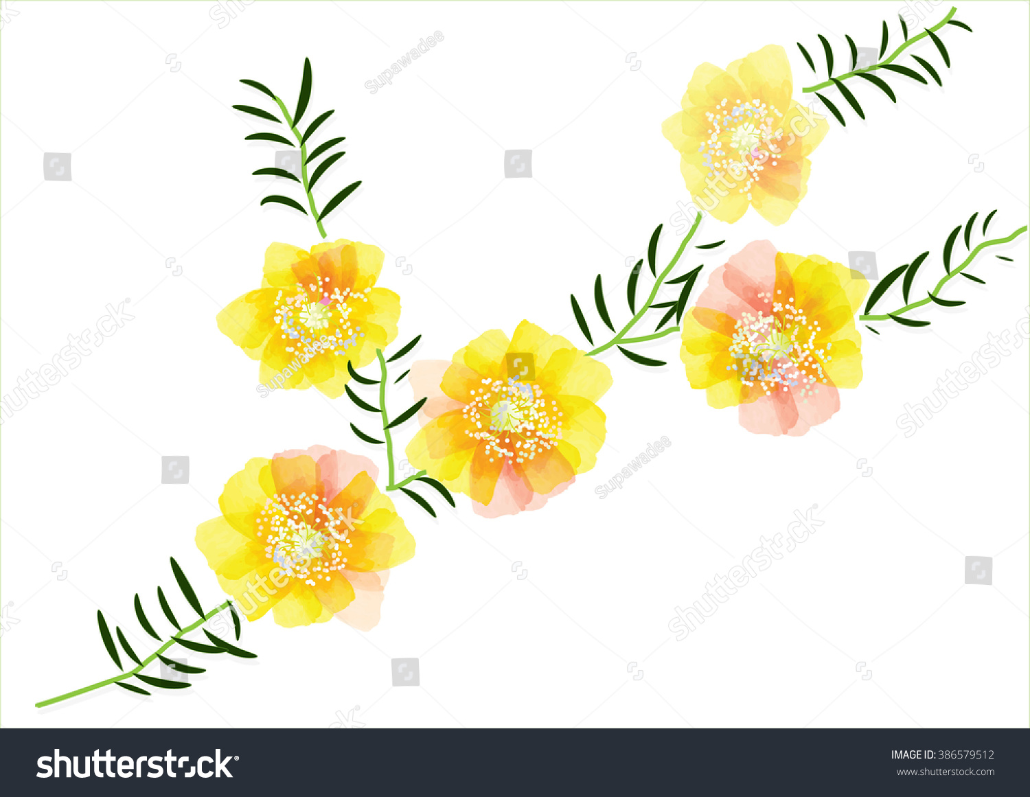 Portulaca Flower Cute Yellow Flowers Leaves Stock Vector Hd Royalty