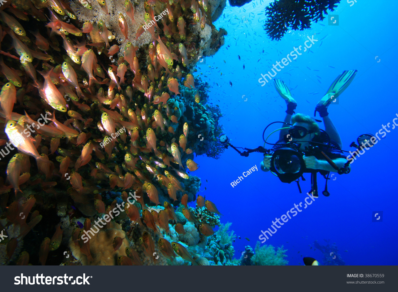 Underwater Photographe...