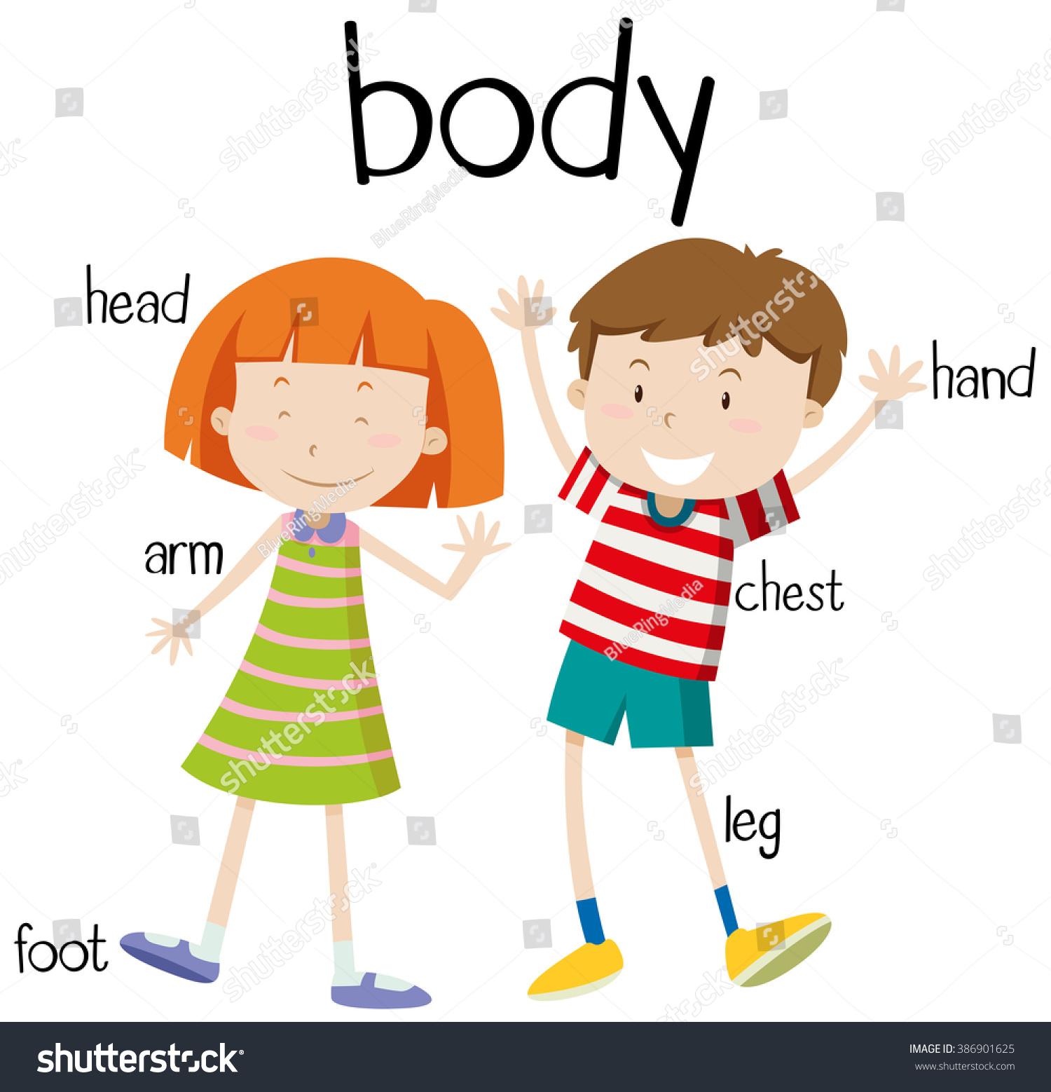 vector de stock (libre de regalías) sobre human body parts diagram ...  shutterstock