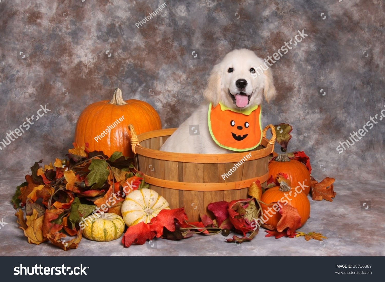 halloween golden retriever puppy