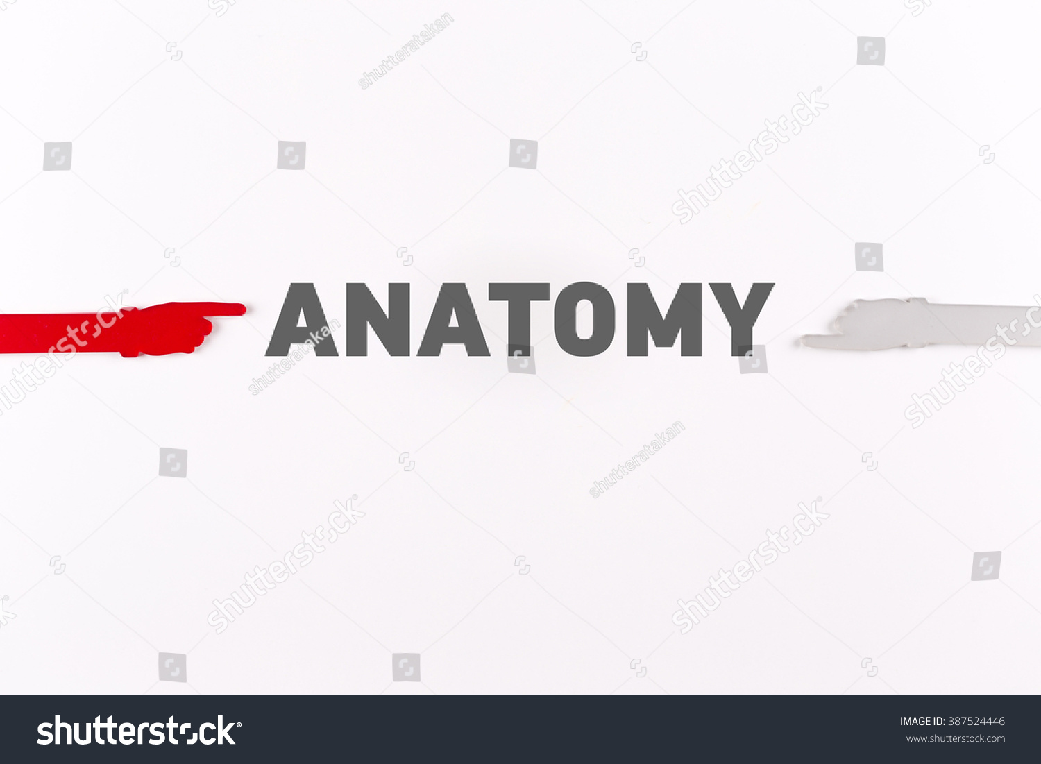 Hands Pointing ANATOMY Word Stock Photo (Royalty Free) 387524446 ...